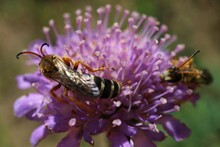 Insect On A Purple Flower
