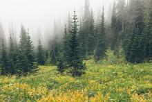 Dense Fog And Lush Alpine Meadow