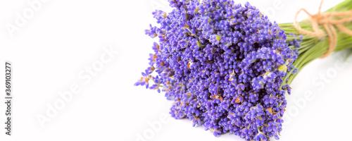 Obraz na plátně Bunch of lavender flowers, fresh lavender, copy space banner