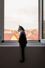 Cat Watching The View