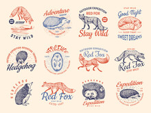 Red Fox And Hedgehog Badges Set. Forest Ginger Wild Animal Label Or Logo. Vector Engraved Hand Drawn Vintage Old Sketch For Stamp, T-shirt Or Typography.