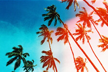 Blue And Pink Palm Trees In Ha...