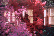 Man Looking Out Window Of Abandoned Home With Flowers