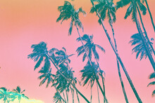 Bright Pink And Yellow Palm Trees On Film