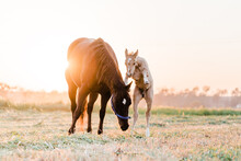 Colt Playing With Mare