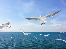 Group Of Seagull Flying In The Air Above The Ocean