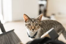 Mischevious Cat