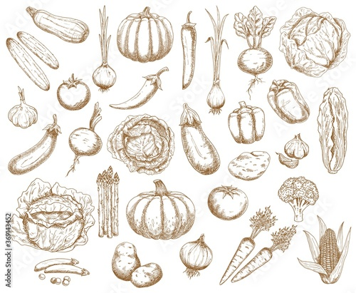 Farm vegetables, greenery and veggies vector sketch Poster Mural XXL