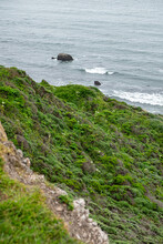 Greenery Growing On A Cliffside Near The Pacific Ocean