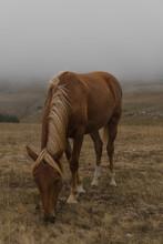 Beautiful Horse Grazes In A Field In The Fog