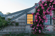 Nantucket Island Roses Blooming On Summer Cottage At Dusk With Warm Window Light