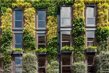 Green Vertical Garden On Apart...