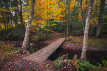 Autumn Foot Path In New Hampsh...