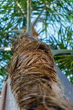 Detailed Close Palm Tree Trunk