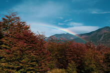 Beautiful Rainbow Behind Autumn Dry Like Vegetation In A Sunny Day And Blue Sky With A Few Faint Clouds In Patagonia, Chile.