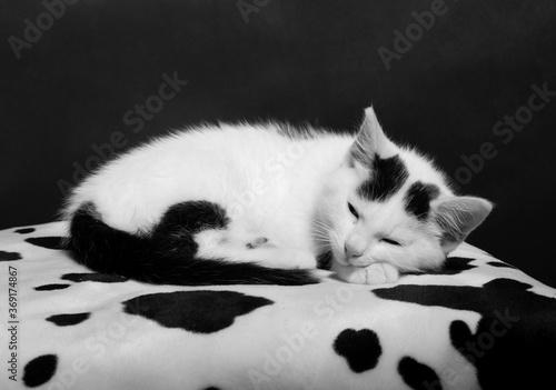 Fototapety, obrazy: Katze