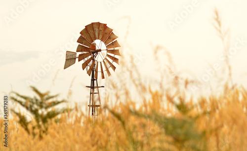 windmill in Australian paddock at sunset