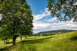 canvas print picture - Summer landscape with green meadow, trees and blue sky