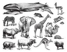 Animal Collection - Vintage Engraved Vector Illustration From Petit Larousse Illustré 1914