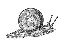Escargot Garden Snail Gliding ...