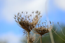 Flowerless Plant With Blue Sky