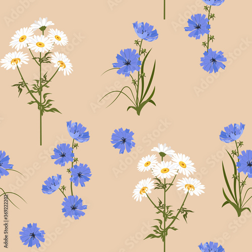 Fototapety, obrazy: Seamless vector illustration with chamomile and chicory flowers