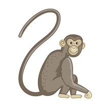 Spider Monkey. Isolated Wild Ape With Long Tail. Cute Primate Mammal Cartoon Character Icon. Vector Wildlife Exotic Spider Monkey Animal