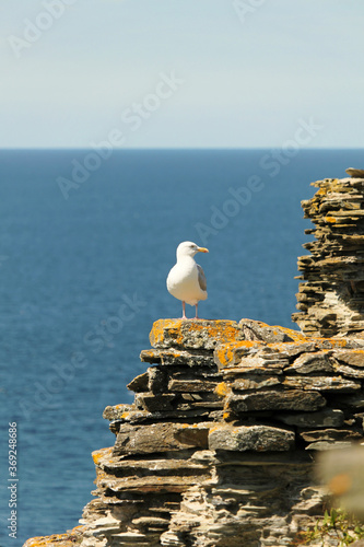 Beautiful sea and mountain view in North Cornwall. Tintagel Fototapet