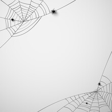Spiderwebs With 3d Crawling Sp...