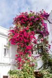 Fototapeta Kwiaty - Andalusia South Of Spain Travel Impression