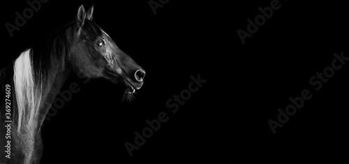 Fotografía Horses on black background