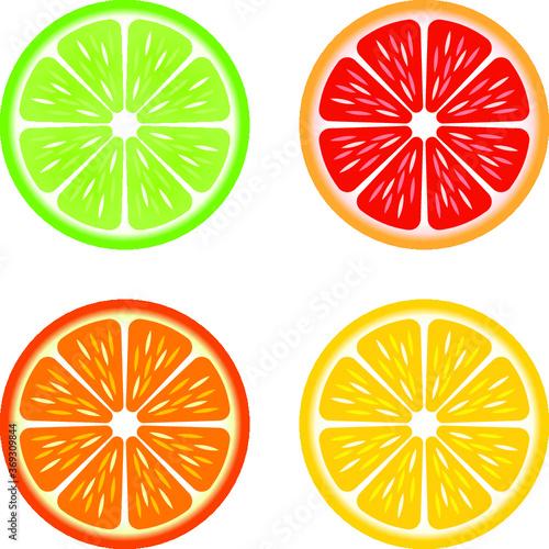 Fototapeta Vector illustration of citrus slices obraz
