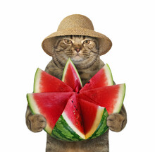 The Beige Cat In A Straw Hat I...