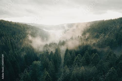 Photo nebel im harz