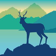 Wild Reindeer Animal In The Ca...
