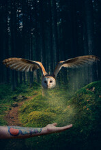 Owl In Forest Abstract Art Wit...