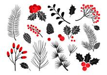 Christmas Vector Plants, Holly...