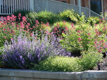 Flowery And Colorful Xeric Landscape, Xeriscaping With Pink And Blue Flowers And Ornamental Grasses, Greenery And Texture