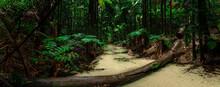 Amazing White Sand Creek And Lush Rainforest