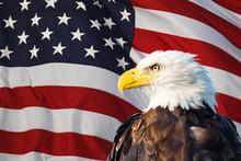 Bald Eagle Superimposed On The American Flag
