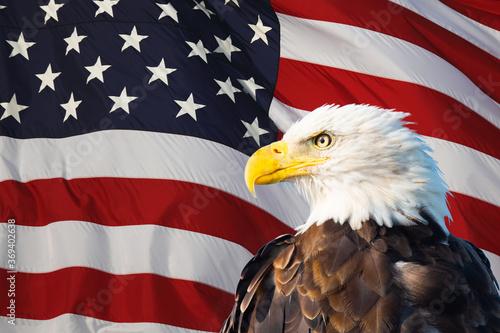 Tablou Canvas Bald Eagle Superimposed on the American Flag