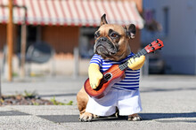 Funny Dog Cosutume On French B...