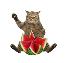 The Beige Cat Is Sitting With A Watermelon, Carved In The Shape Of A Flower. White Background. Isolated.