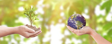 Environment Day Concept: Child Hands Holding Tree And Earth Over Blurred Nature Background. Elements Of This Image Furnished By NASA