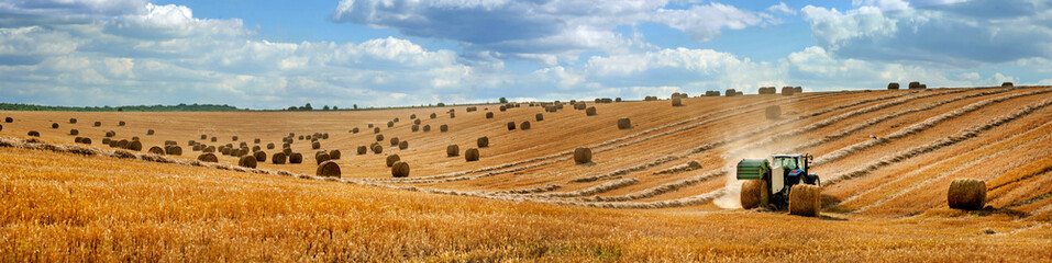 large panorama of a field with bales of straw, a tractor with a baler harvesting straw