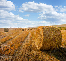 Cylindrical Straw Bales Lie On A Sloping Field