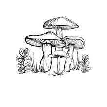 Drawing With A Mushroom. Handmade Graphics. Edible Mushrooms And Toadstools. Healthy Food Illustration. Autumn Forest Coloring Pages For Children And Adults. For Recipe, Menu, Label, Coloring