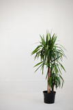 Studio shot of potted plant. Potted plant on white background