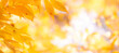 Leinwandbild Motiv Autumn background with orange, yellow leaves and golden sun lights, natural bokeh. Fall nature landscape with copy space