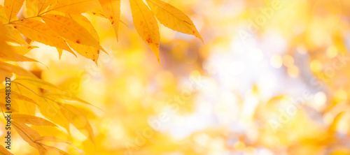Autumn background with orange, yellow leaves and golden sun lights, natural bokeh Canvas-taulu